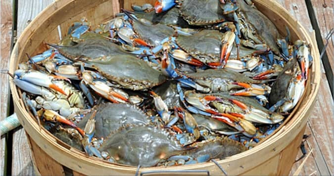 bushel of crabs in a basket