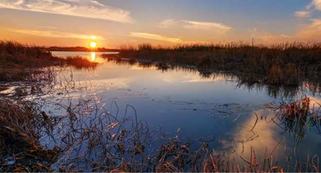 pond with swampy grass and the sun setting in the background